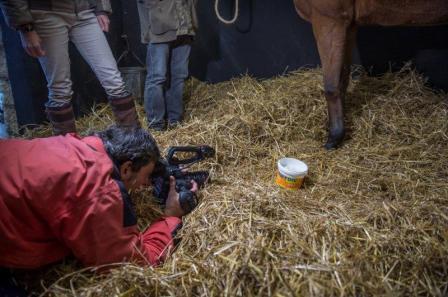 chevaux Chantilly2577PascalTournaire-6bdf